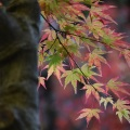 Fall Leaves 5
