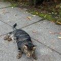Neighborhood Cat 2