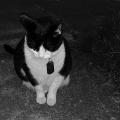 Night Kitty
