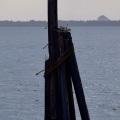 Sea Pole and Gull