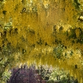 Yellow Canopy, Kew Gardens, London