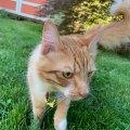 Backyard Visitor Cat