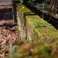 Mossy Wall 2