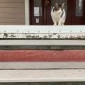 Stairs Cat 2
