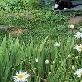 Summer Meow