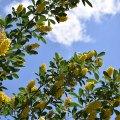 Yellow Overhead