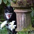 Garden Watch Cat