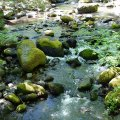 Lithia Park (Ashland, Oregon)