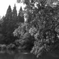Laurelhurst Park 2